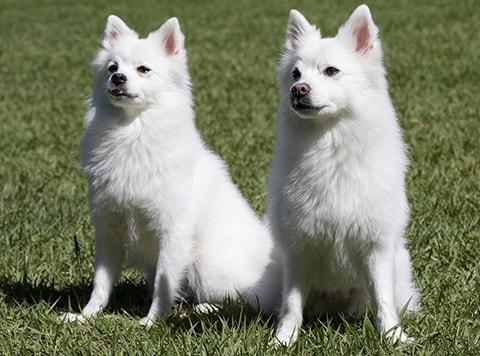 dogwatch perimeter training