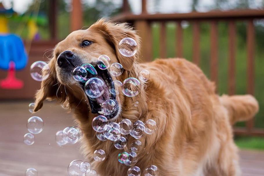 dog IG